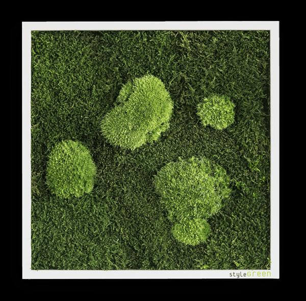 MOOSBILD: WALD- UND KUGELMOOSBILD 55X55 CM