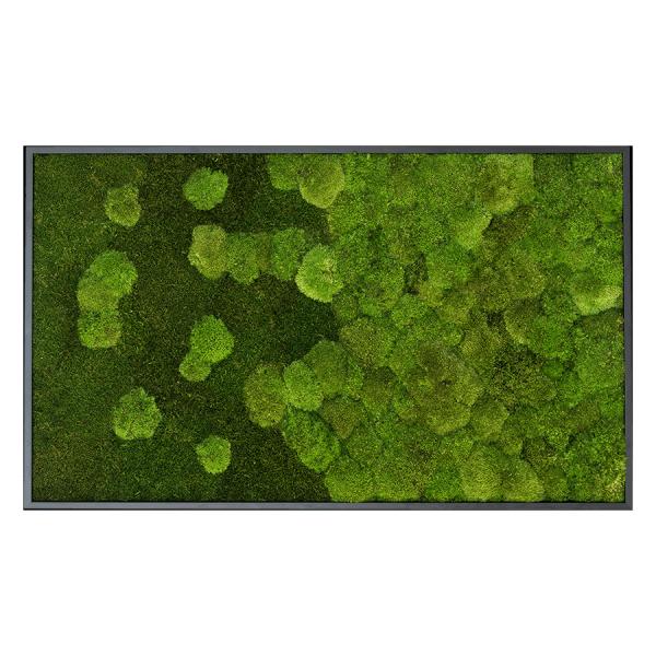 styleGREEN MOOSBILD VERLAUF WALD- UND KUGELMOOSBILD 100X60 cm